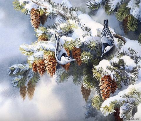 Птицы американской художницы Сьюзен Бордет