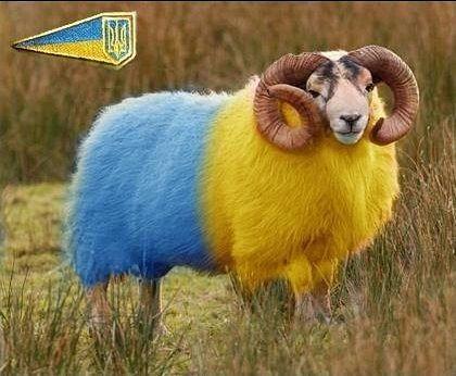 Интервью с овечкой