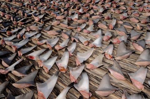 Море акульих плавников