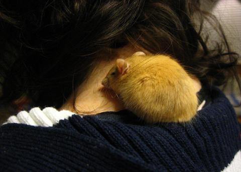 Биологи создали «просветленных» мышей
