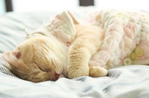 С таким котом не проспишь и …