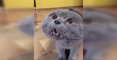 Говорящий кот зовет Галю, а Галя все не приходит.
