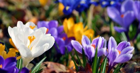Как подготовить сад к весне?