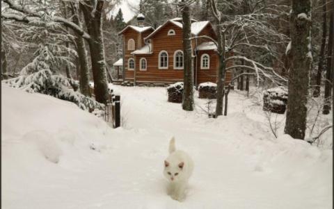 Валаамские монахи по котам предсказали погоду в Карелии