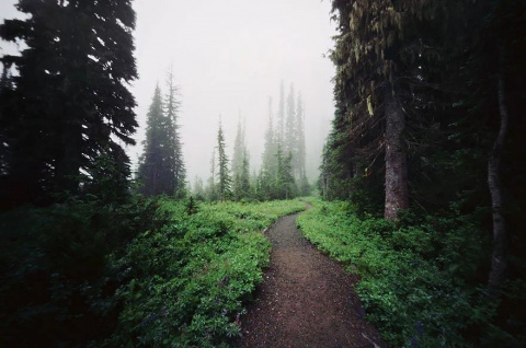 Магические Тропы, Ведущие Пр…