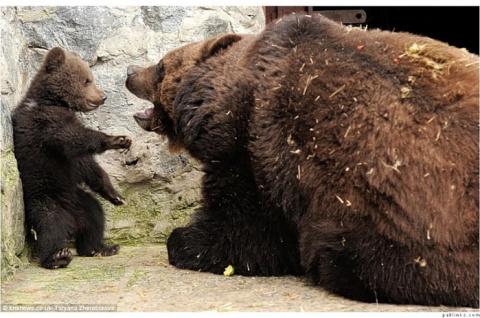 Воспитание по-медвежьи —  с мордобитием и лапоприкладством. А обнимашки - на сладкое..