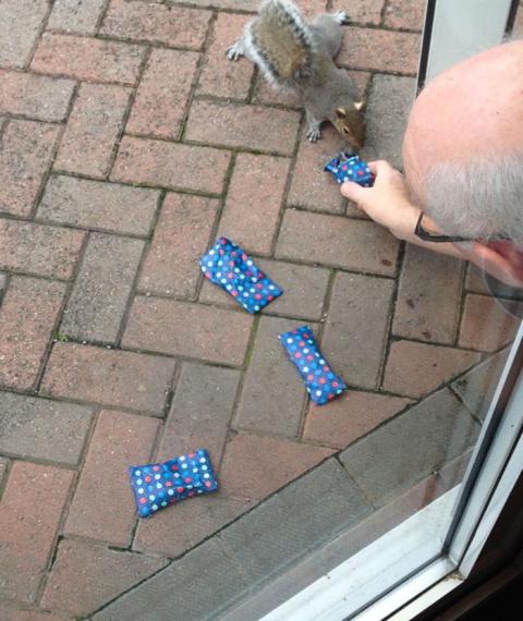 Мужчина завернул крошечные рождественские подарки для белок, и интернет очарован этим поступком