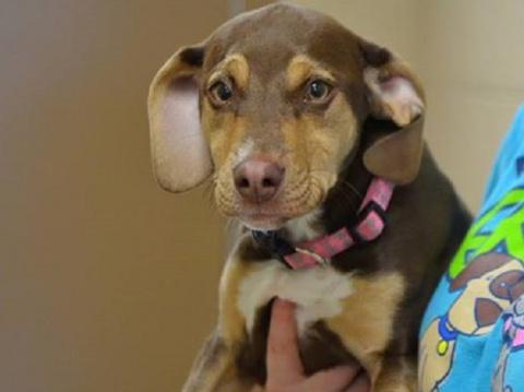 Собака, взятая из приюта, спасла маленькую девочку