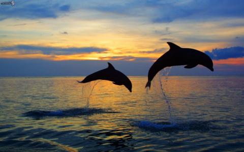 Голодные дельфины довели ита…