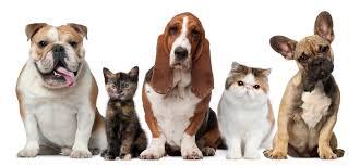 Кладбище домашних животных..…