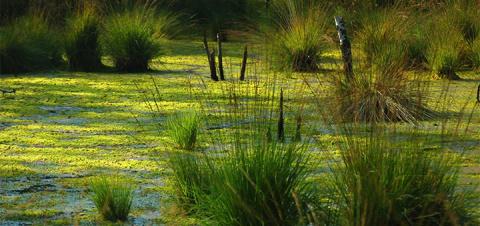 Страшная тайна болотных тел:…