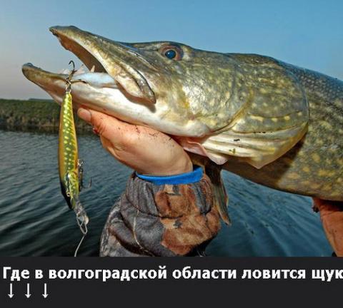 63. где ловить щуку в Волгоградской обл