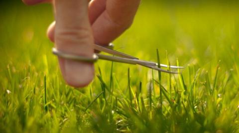 11 советов владельцам газонов
