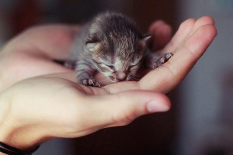 Ночное спасение котёнка и тем, чьи питомцы ушли на радугу