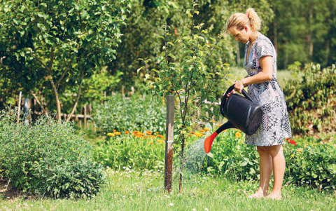 Андрей Туманов: сад сначала …