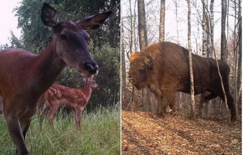 Дикая природа Чернобыля: что стало с флорой и фауной через 30 лет после катастрофы