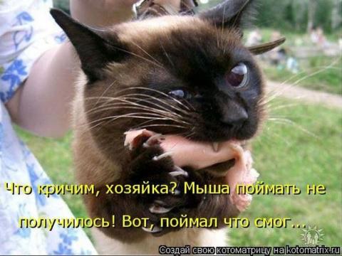Свежая подборка котоматриц)