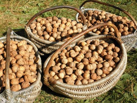 Как аккуратно колоть орешки