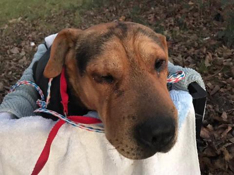 Верная собака не отходила от раненого друга много дней
