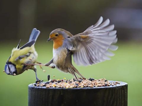 Птицы классные… но не всегда