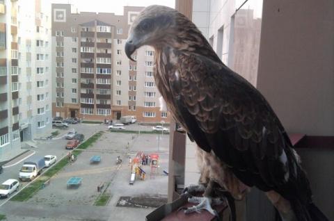 Хищные дикие птицы в большом…