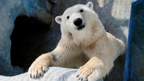 Прибалтика, вольно! Русский медведь никуда не собирается