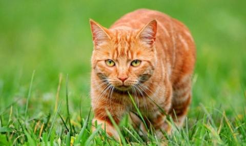 Рыжий кот был предан ему до …