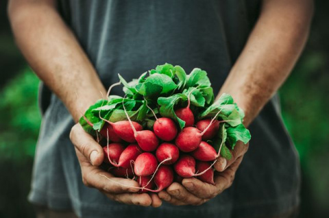 Почему выращивать редис лучше в сентябре: личный опыт