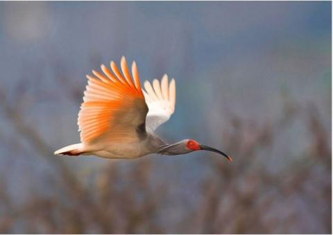 Фотоконкурс самых редких птиц мира