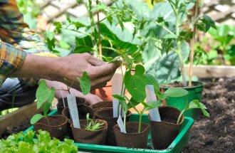 Высадка рассады овощных и де…