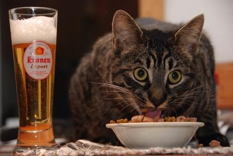 Почему кошки не любят пить в…