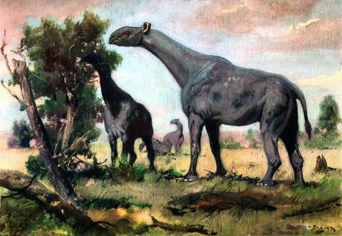 Вымирание динозавров не повл…