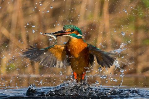 Это обязательно стоит увидеть — лучшие фотографии животного мира за 2016 год