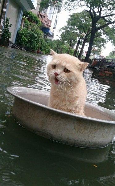 Спасение кота, терпящего бед…