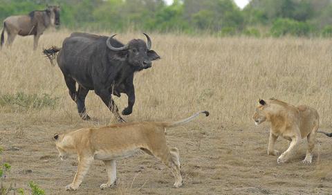 10 самых смертоносных животн…
