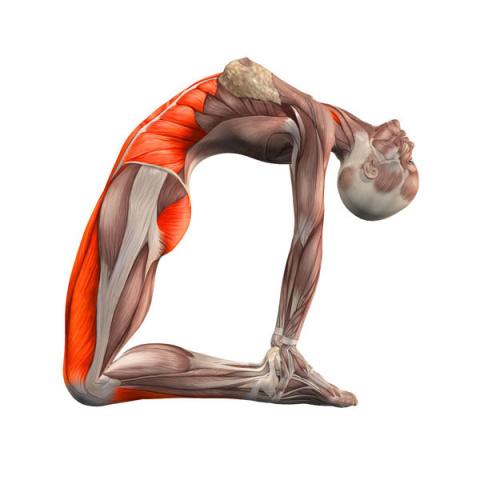 Тренировка мышц малого таза …