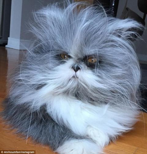 Кот или собака? Пушистый питомец стал новым объектом интернет-споров