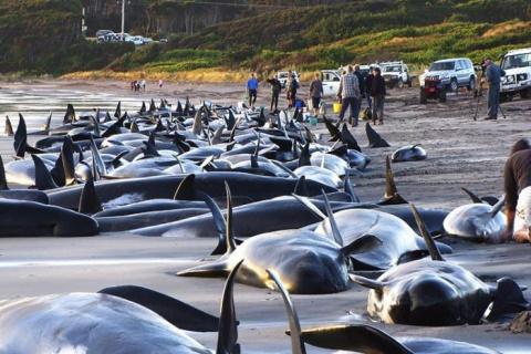 Киты и дельфины выбрасываются на берег из-за солнечных штормов?