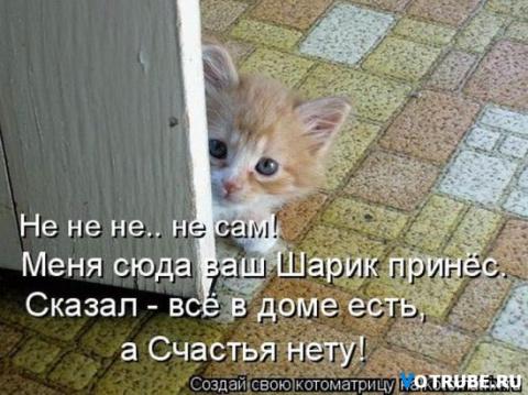 Веселые картинки про животных))