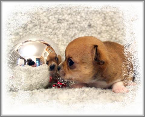 Мои чишки-крошки на ладошке )))