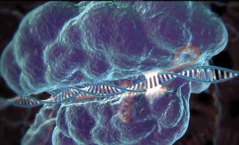 Впервые в ДНК человеческого эмбриона заменили ген, отвечающий за болезнь