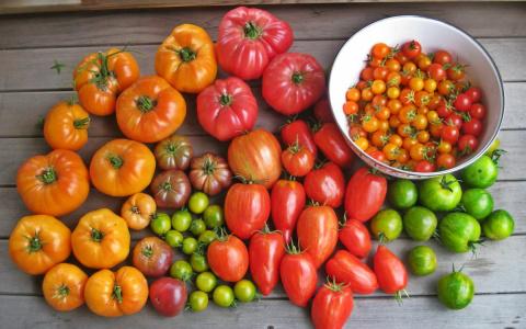 12 скороспелых сортов томато…