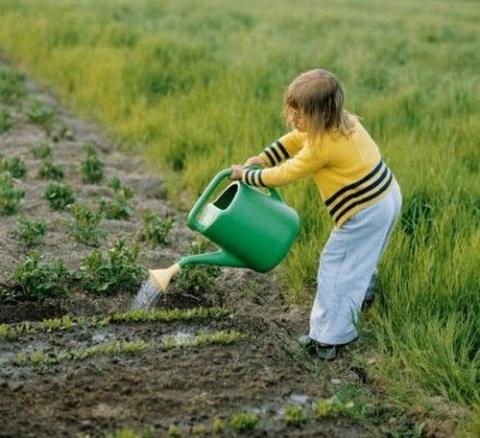Поливать огород надо умеючи. Розы: вредители и болезни.