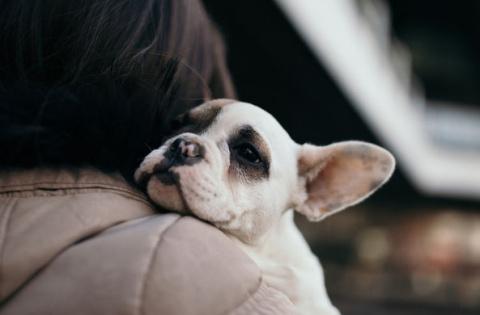 Собаки оказались способны чу…