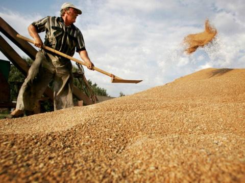 «Хлеб всему голова», или как мы мировой рынок завоевали