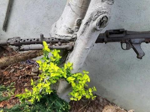 Вросшее в деревья оружие ВОВ
