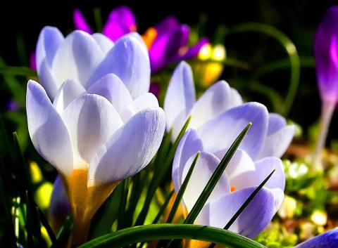 Природа: дыхание весны