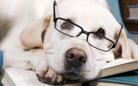 Рейтинг самых умных пород собак. Животные, у которых можно поучиться верности и любви