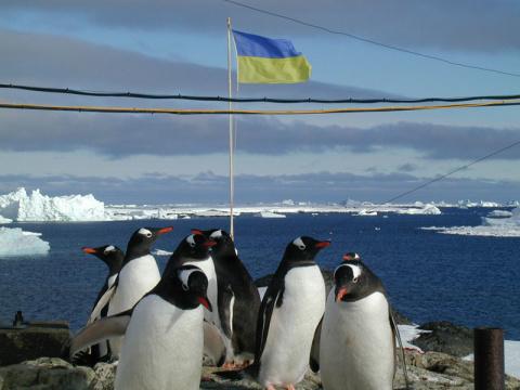 Украину спасут пингвины в вы…