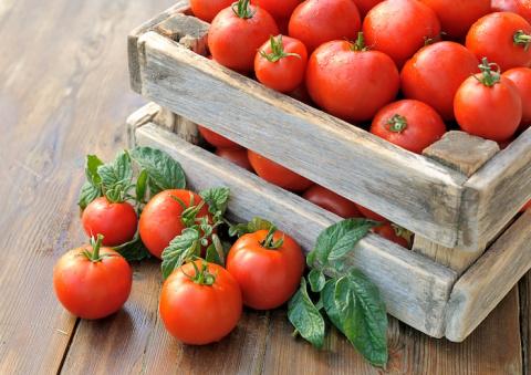 Как я заработал свой первый миллион на помидорах!